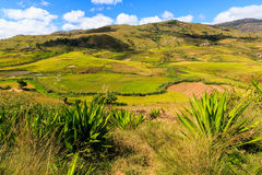 Landscape with rice fields in central Madagascar Stock Image