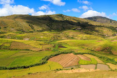 Landscape with rice fields in central Madagascar Royalty Free Stock Photography