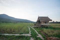 Landscape of rice fields in the evening of Thailand. Landscape of rice fields And cottages in the evening of Thailand stock photo