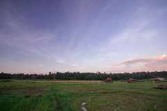 Landscape of rice fields in the evening of Thailand. Landscape of rice fields And cottages in the evening of Thailand royalty free stock image