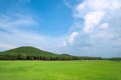 Landscape of rice fields. NAI- VIETNAM: landscape of rice fields in Tri An, Nai province, Vietnam royalty free stock image