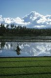 Landscape with rice fields and dramatic sky Stock Photos