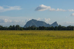 Landscape of rice fields. And mountain backgrounds Stock Image