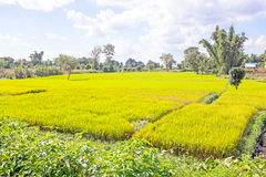 Landscape with rice fields in Myanmar Royalty Free Stock Photos