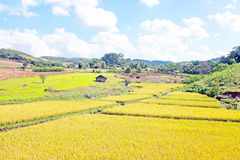 Landscape with rice fields in Myanmar Royalty Free Stock Photo