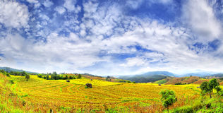Landscape of rice fields Royalty Free Stock Photos