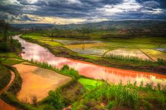 Landscape with the rice fields and Onive river at Antanifotsy,Madagascar royalty free stock images