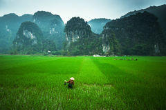 Landscape with rice fields and people Royalty Free Stock Photos