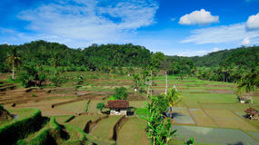 Landscape of rice fields. In remote areas tasikmalaya, very beautiful and unspoiled stock image