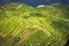 Landscape rice fields on terraced. Longji Rice Terraces Dragon`s Backbone in Longsheng. China.  stock image