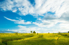 The landscape of rice fields in Thailand 3. The landscape of rice fields in Thailand stock images