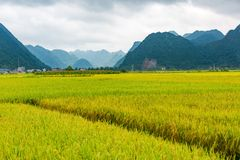 Landscape with rice paddy in Bac Son, Lang Son. Vietnam royalty free stock image