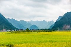Landscape with rice paddy in Bac Son, Lang Son. Vietnam royalty free stock photo