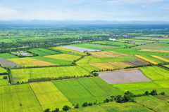 Landscape of rice plantation and meadow on rural area Stock Photography