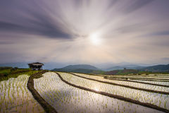 Landscape of Rice Terrace in Thailand Stock Photos