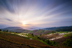 Landscape of Rice Terrace in Thailand Royalty Free Stock Image
