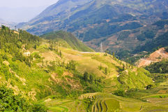 Landscape of rice terraced field Royalty Free Stock Photos