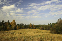 Landscape ripe rye field at the edge of forest Royalty Free Stock Photography