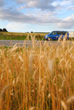 Landscape of ripe wheat field and blue van Stock Image