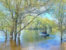 Landscape. The river came out of the riverbed and flooded the birch trees. The trees are in the water. A boat on the water carrie. S people to the other side stock photos