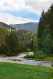 Landscape of a river among Carpathians mountains with fir-tree Stock Image