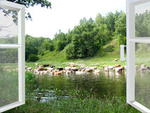 Landscape with the river and cows Royalty Free Stock Photography