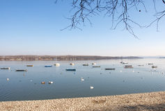 Landscape of river Danube with swans, Zemun, Serbia. Early winter morning landscape of river Danube with a flock of swans, nearby Zemun, Serbia Royalty Free Stock Photo