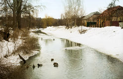 Landscape with river and ducks in water Royalty Free Stock Images