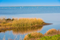 Landscape river Ebro Delta in Spain, Tarragona, Catalunya. Copy space for text. Royalty Free Stock Photos