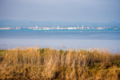 Landscape river Ebro Delta in Spain, Tarragona, Catalunya. Copy space for text. Royalty Free Stock Image