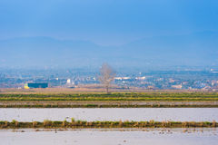 Landscape river Ebro Delta in Spain, Tarragona, Catalunya. Copy space for text. Stock Images