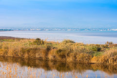 Landscape river Ebro Delta in Spain, Tarragona, Catalunya. Copy space for text. Royalty Free Stock Photo
