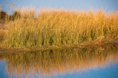 Landscape river Ebro Delta in Spain, Tarragona, Catalunya. Copy space for text. Stock Photos