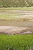 Landscape of river and farm. In Tibet fo China.A horse is in the picture Royalty Free Stock Image