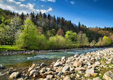 Landscape with river and forest Stock Image