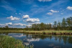 Landscape river and green trees. Landscape blue river and green trees Stock Photos