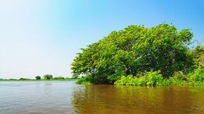 Landscape with the river and green vegetation of trees and plant. S on the river banks. Beautiful clear blue sky and the water of the river. Photo taken in royalty free stock photography