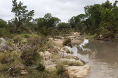 Landscape with river in kruger national parc Stock Photography