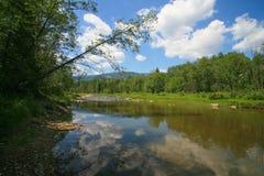 Landscape river mountain wood sky Stock Photos