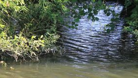 Landscape river nature. Slowly flowing water stock video