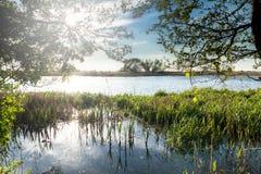 Landscape on the river Nogat, Poland Stock Image