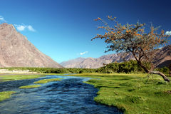 Landscape with river in Nubra valley Stock Photography
