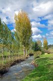 Landscape with river and poplars Royalty Free Stock Photography