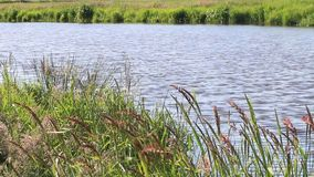 Landscape river slowly flowing water. Landscape nature, river, slowly flowing water stock video footage
