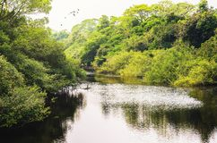 Landscape of a river surrounded by forest of green vegetation. Trees and plants on the river banks. Photo taken in Pantanal, Brazil Royalty Free Stock Photos