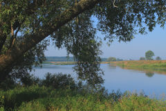 Landscape river and trees Royalty Free Stock Image
