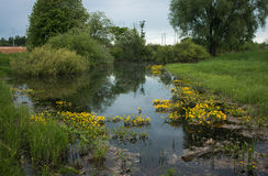Landscape with a river and yellow flowers, Bogolubovo, Russia Royalty Free Stock Image