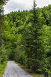 Landscape with a road through alpine forest. In a summer day Royalty Free Stock Images