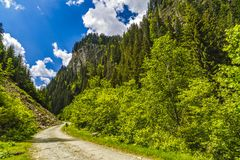 Landscape with a road through alpine forest. In a summer day Stock Image