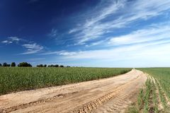 Landscape road through the field Royalty Free Stock Photography